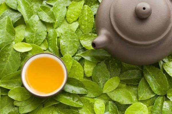 乐天堂官网网址茶提醒您:春天喝茶,好处多多 !
